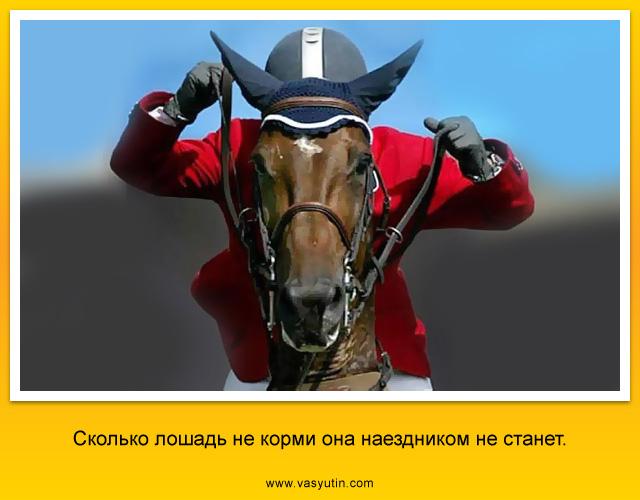 Сколько лошадь не корми она наездником не станет.
